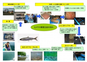 十和田湖ひめます種苗生産の流れ